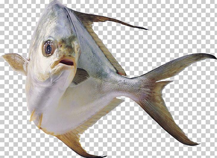 Fish Png Fish Fish Colorful Fish Fish Tank