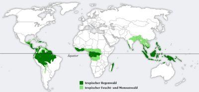 La selva tropical o bosque lluvioso tropical es propio de las zonas tropicales/ecuatoriales en las que no existe una verdadera estación seca...