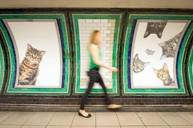 В Британии появилась необычная реклама в метро, на которой одни только кошки  Британская группа The Citizens Advertising Takeover Service (Служба захвата рекламы гражданами, сокращенно CATS) выкупила рекламные места на станции Клэпхэм-Коммон в Лондоне и разместила на ней фотографии кошек.  Британская группа The Citizens Advertising Takeover Service (Служба захвата рекламы гражданами, сокращенно CATS) выкупила рекламные места на станции Клэпхэм-Коммон в Лондоне и разместила на ней фотографии…