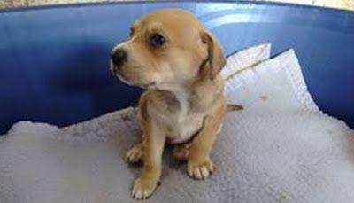 CACHORROS EN ADOPCIÓN: Cachorros Jaén: 2 meses