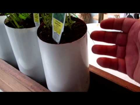Totally Automatic 2 Liter Pop Bottle Grow System!!! You have got to see this!