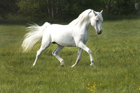 Stwórz swoją wirtualną stajnię!: Giełda koni