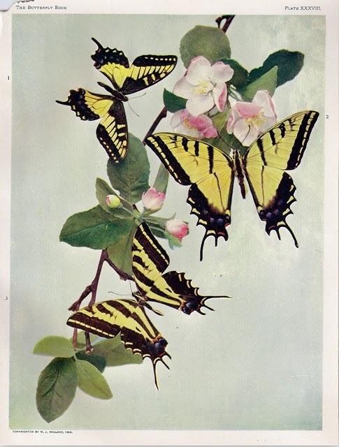 ButterfliesButterflies Illustration, Butterflies Book, Art Prints, Butterflies Printables, Nature Printables, Butterflies Art, Book Illustration, Art Illustration, Printables Posters