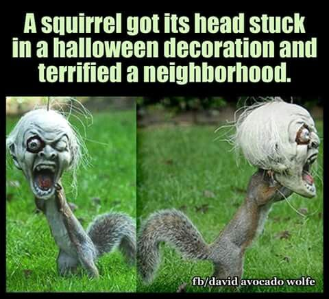 A squirrel gets head stuck in a Halloween decoration