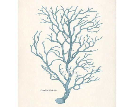 Vintage Coral Illustration