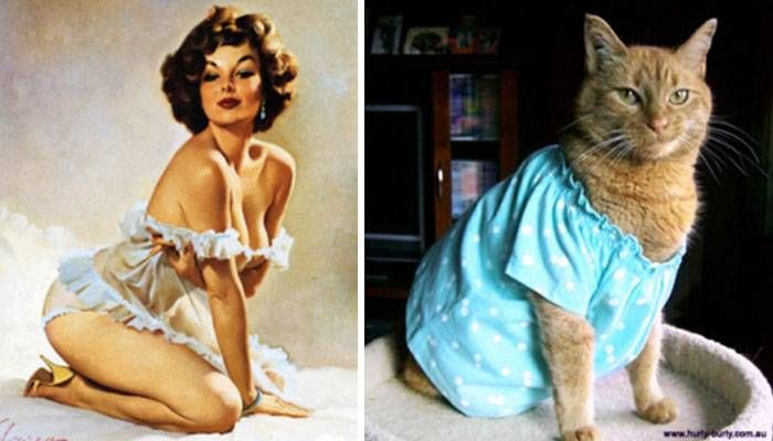 Cats Doing Sexy Poses Like Pin Up Girls , http://happybrainy.com/cats-pin-up-girls/ Check more at http://happybrainy.com/cats-pin-up-girls/