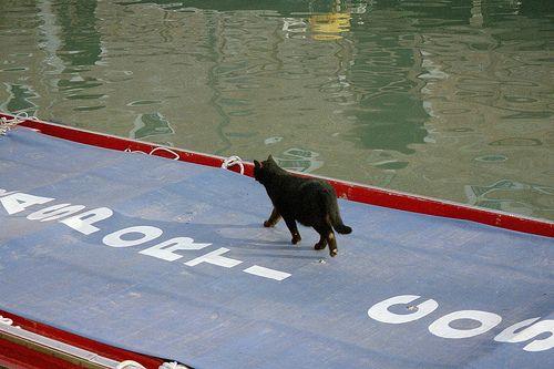 Venetian cat on boat