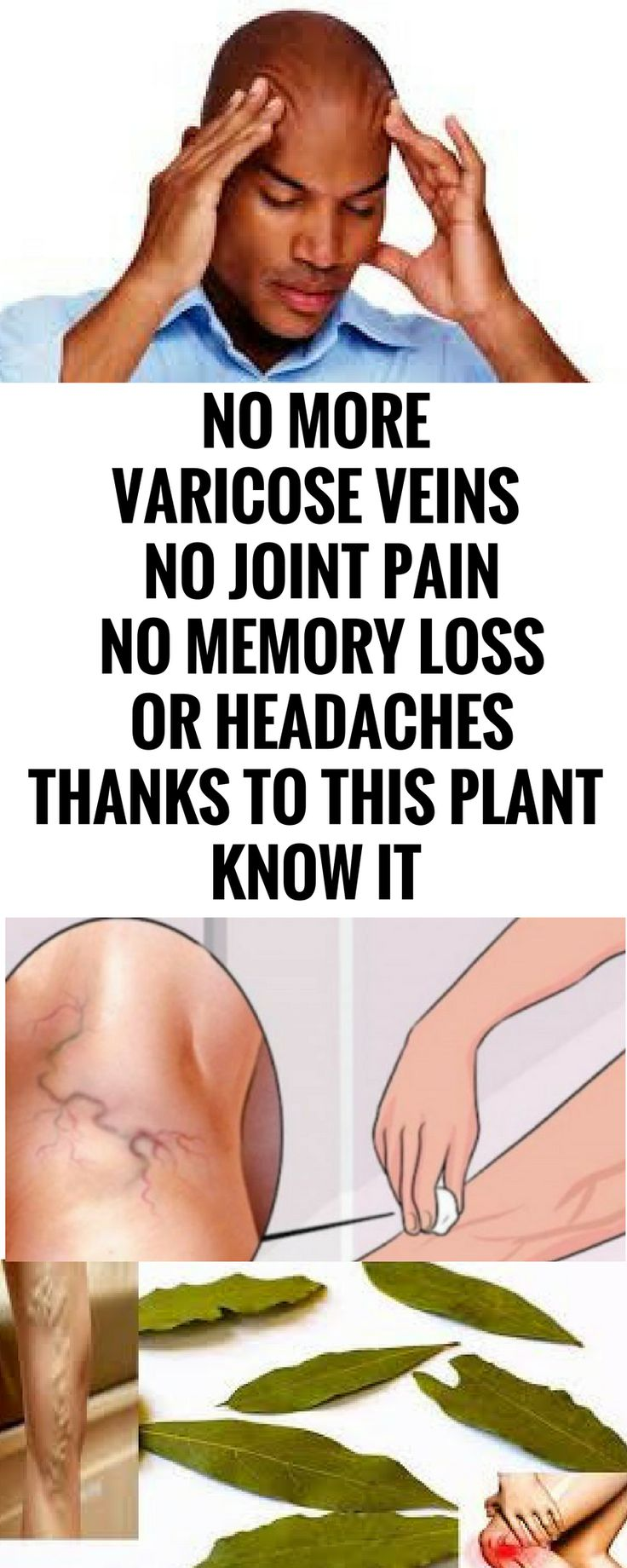 NO MORE VARICOSE VEINS, NO JOINT PAIN, NO MEMORY LOSS, OR HEADACHES THANKS TO THIS PLANT, KNOW IT