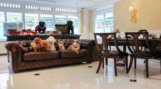 Ubicado en Dempsey Hill, Singapur, este hotel se dedica a brindar alojamiento de primer nivel para mascotas. Servicios de spa, comida gourmet y piscina para huéspedes con cuatro patas que tengan dueños con ganas de gastar hasta 400 dólares la noche.