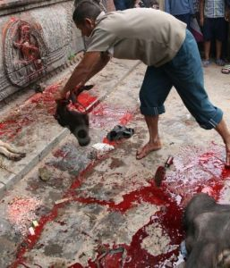 Over 15,000 animals are expected to be slaughtered during a Hindu festival. This practice is unnecessarily cruel and unjustifiable, even as a religious tradition. Sign this petition to stop this ritualistic animal sacrifice.