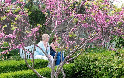 Blomstrende buske i foråret