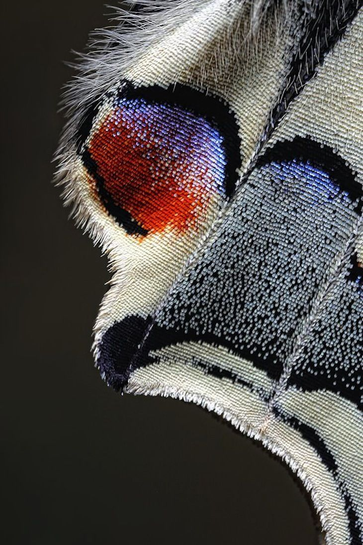 Wing of a Butterfly - Photograph taken by Jim Hoffman