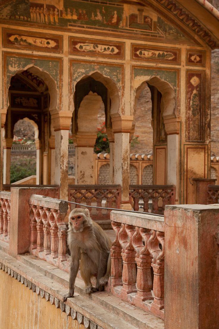 The Monkey Temple, Jaipur, India. - #places
