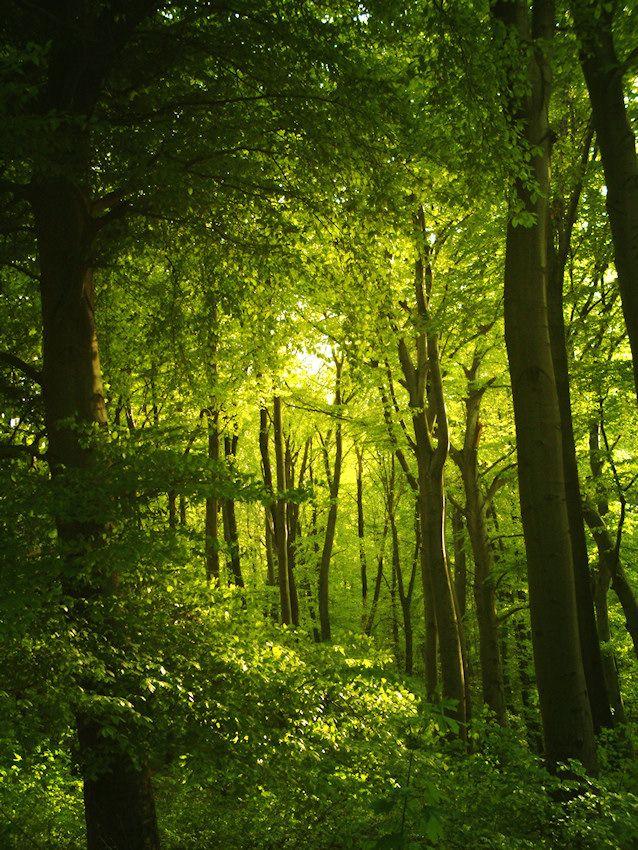Plant Identification: A Holistic Path {{ a free e-course }}