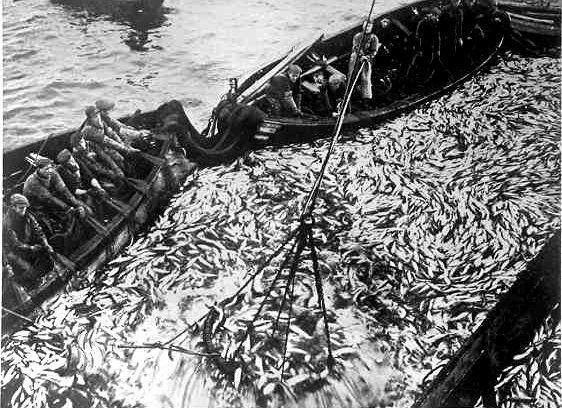 From Wikiwand: Doryer og snurpenot under fiske etter sild ved Haugesund i 1938.Foto: Anders Beer Wilse