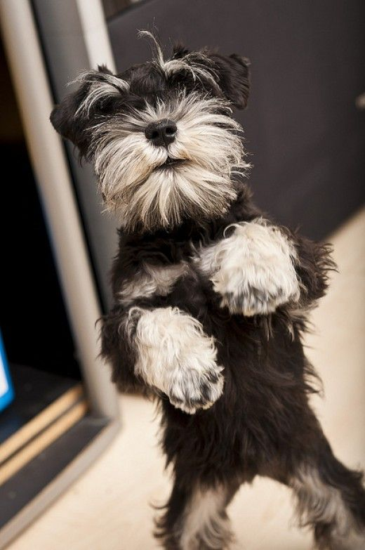 Do you have a German dog breed? You should find a special name, and this article will give you plenty to choose from.
