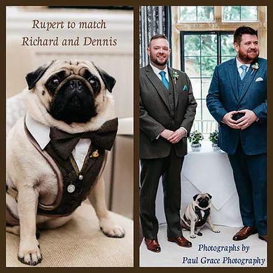 Bespoke Dog Harnesses by The Very Distingished Pug Company