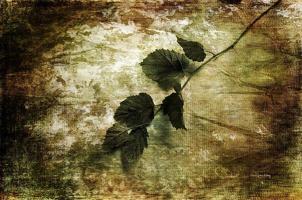 A Little Nature by #RandiGraceNilsberg