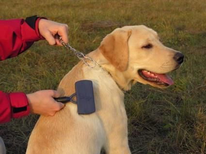 Different types of dog grooming supplies