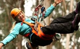 Otway Fly Treetop Adventures offers a whole host of experiences with the two core activities being The Otway Fly Treetop Walk and The Otway Fly Zip Line Tour.