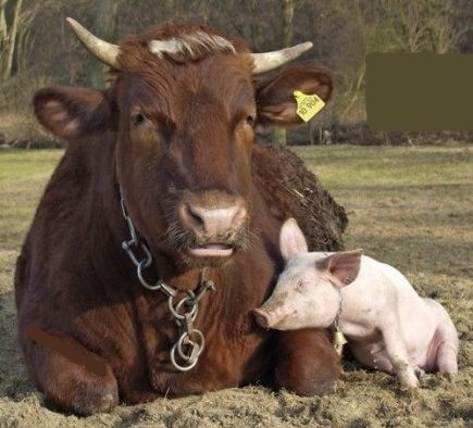 Nonhuman animals make friends, just as humans do - they choose companions based upon personality and compatibility. These two friends enjoy a quiet moment of connection, love, and warmth.