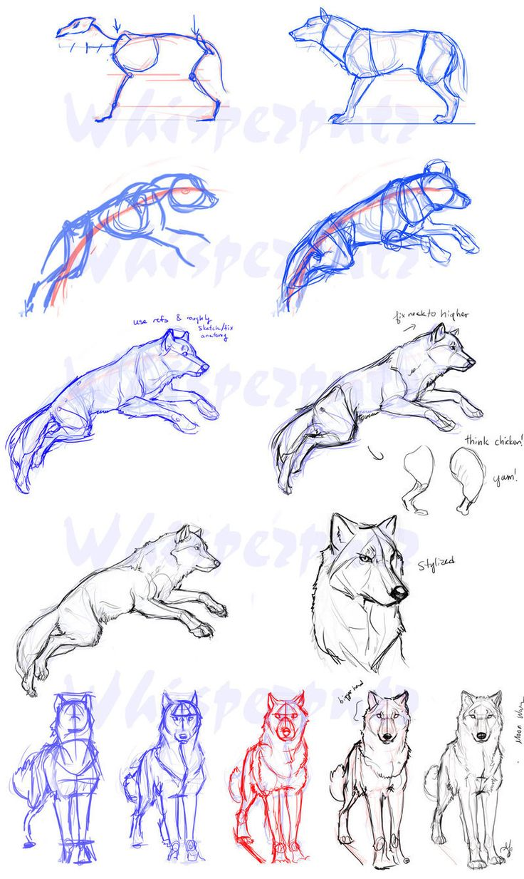 http://www.deviantart.com/art/Wolf-Construction-129686469