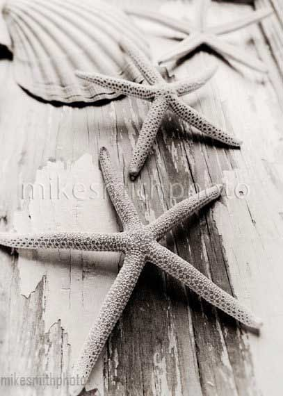 Nautical Decor Starfish Shell Beach Cottage by mikesmithphoto, $15.00