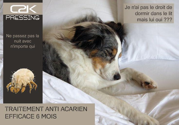 Traitement Anti-acarien du linge de lit, couette, oreiller, tapis, rideaux, moquettes, matelas, .....
