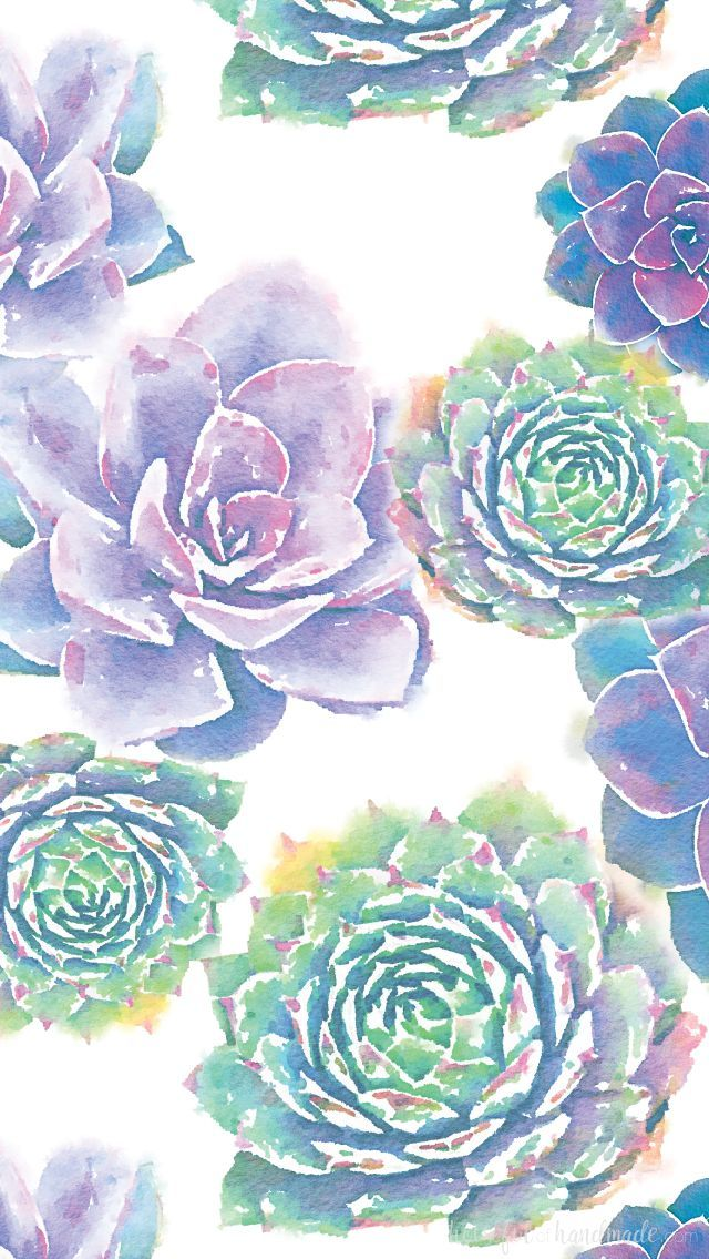 January Smartphone Background Watercolor Succulents Png 640 1135