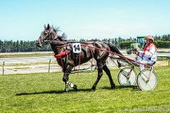 DSC02451.jpg (The Digital Birdcage) Tags: horse horseracing harnessracing motukarara bankspeninsulatrottingclub gerardoreilly jackalacksue