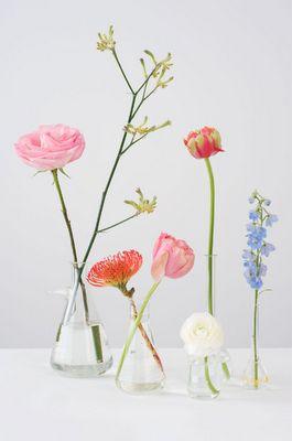 Ranunculus, protea, monkey paw, delphinium