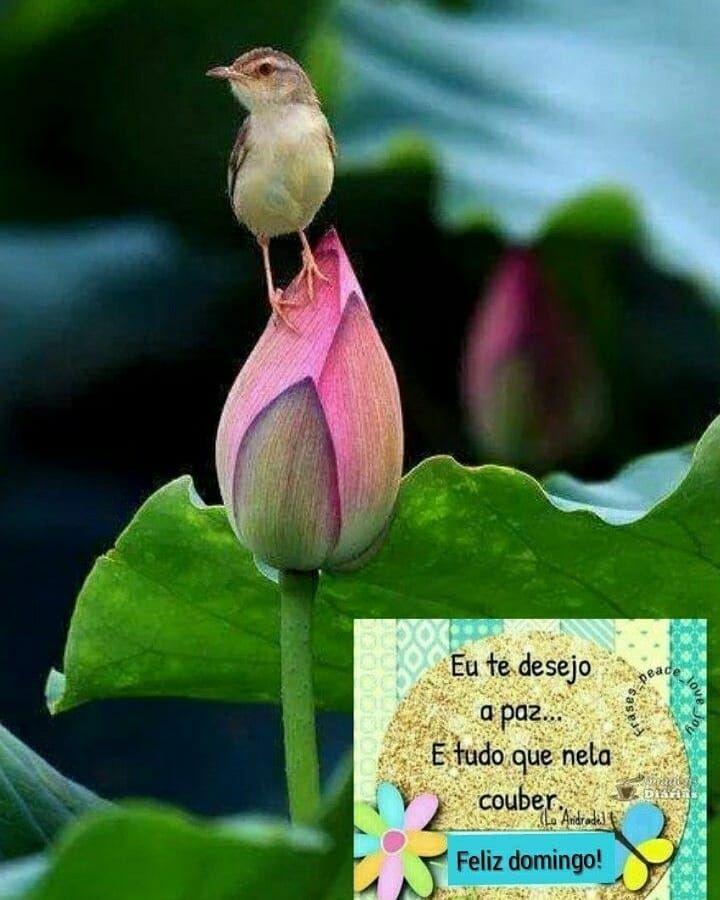 A Imagem Pode Conter Flor Planta E Texto Mensagen De Bom Dia