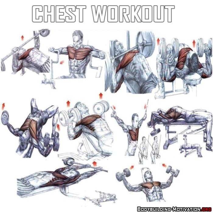 Bodybuilding Chest Exercises Chart Hd