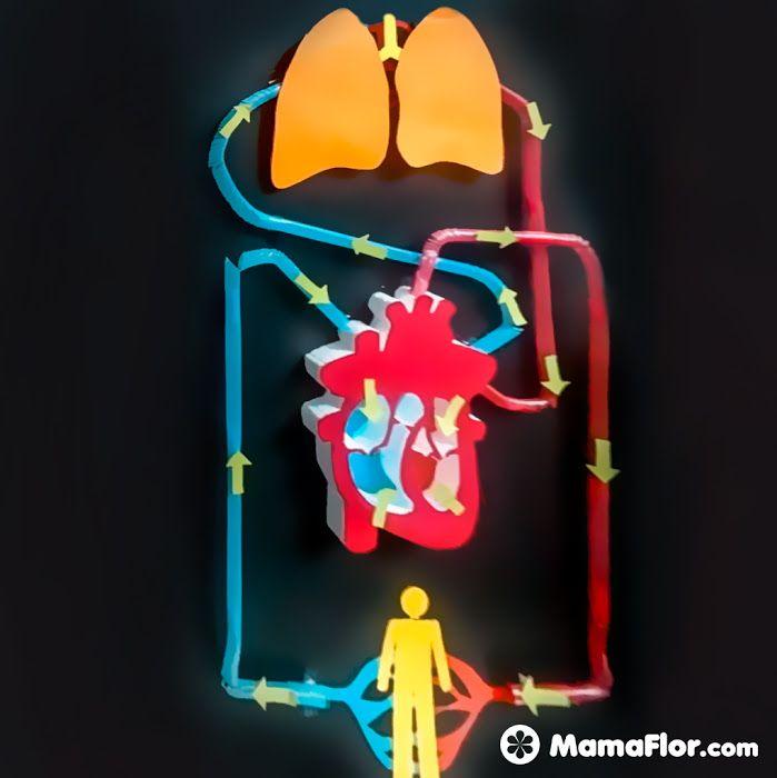 Maquetas Del Sistema Circulatorio Fáciles Con Pajitas Sistemas Del Cuerpo Humano Proyectos De Ciencia Para Niños Manualidades