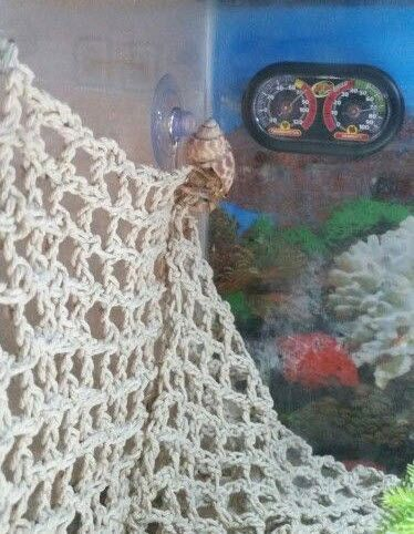 DIY Net Climbing Wall because hermit crabs love to climb! #DIY - PetDIYs.com