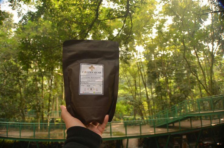 A yellow bourbon From papandayan mountai Yellow coffee