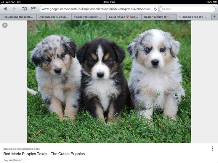 These are the cutest puppy's ever!!!!!!!!!!