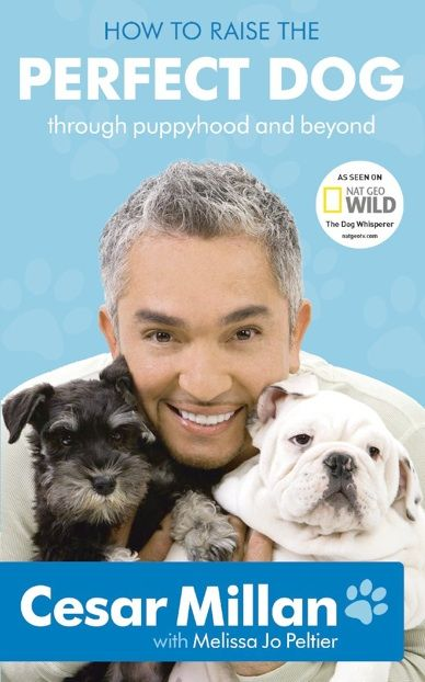 How To Raise The Perfect Dog by Cesar Milan. Through puppyhood and beyond.  Dog Training #dogtraining #cesarmillan #puppy #puppylove
