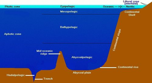 ocean on pinterest : ocean layers diagram - findchart.co