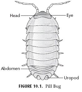 pill bug coloring pages - photo#33