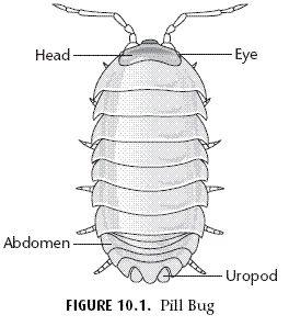 Diagram Of A Pill Bug Jeep Tj Soundbar Wiring Arthropod Behavior-pill   Science Pinterest Unit Studies, Kindergarten And ...