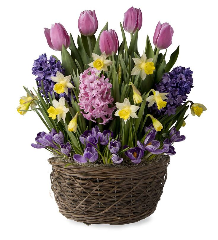 Brighten A Loved Ones Day With Our Cheerful, Fragrant Pink Flower Bulb  Garden. This Charming Floral Gift Garden Has Hyacinths, Tulips, Daffodils  And Crocus.