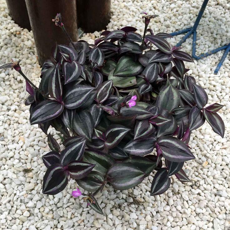 20 best Winterharte Pflanzen images on Pinterest | Hardy plants ...