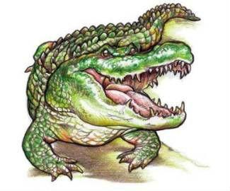 http://Tattoo-Bodyink.com ( Download free alligator tattoo designs.