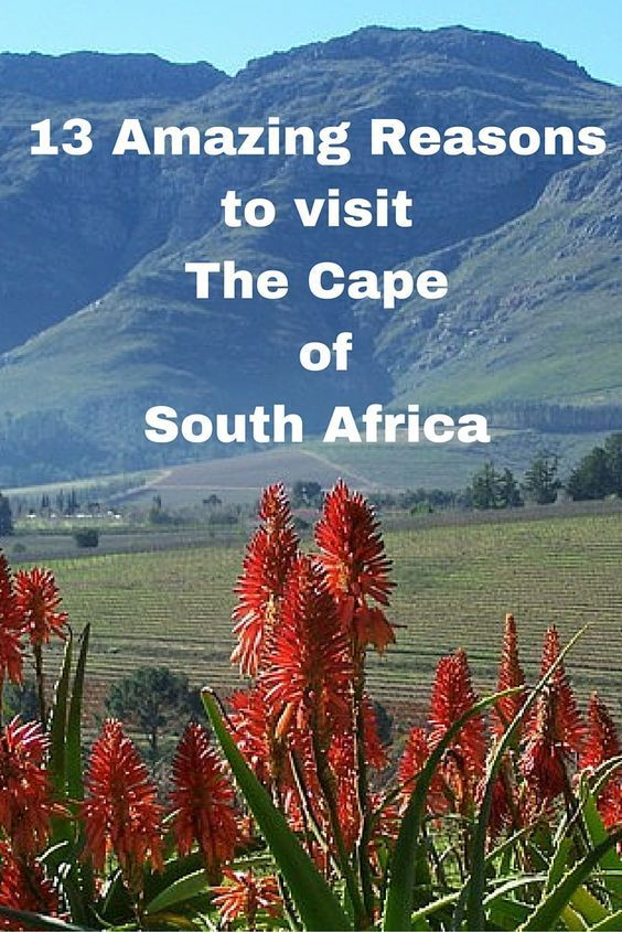 The Cape of Many Colours. 13 Amazing reasons to visit South Africa. - ZigaZag