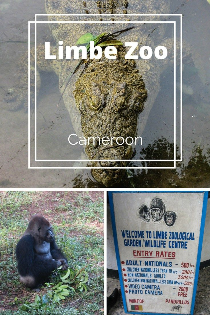 Discover more about Limbe zoo from my work trip to Cameroon | Laugh or Cry laughorcry.ie