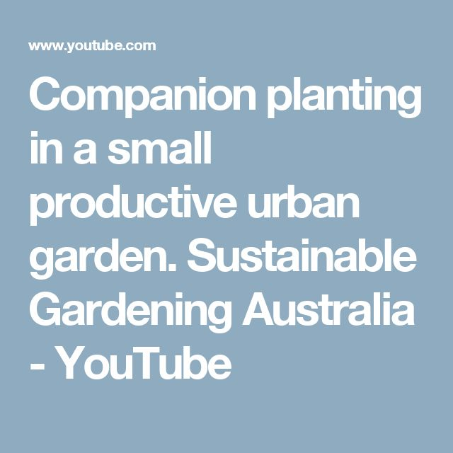 Companion planting in a small productive urban garden. Sustainable Gardening Australia - YouTube