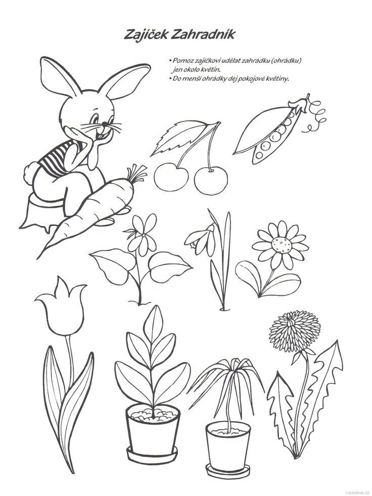 zajíček zahradník