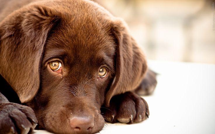 Výsledek obrázku pro sad dog eyes