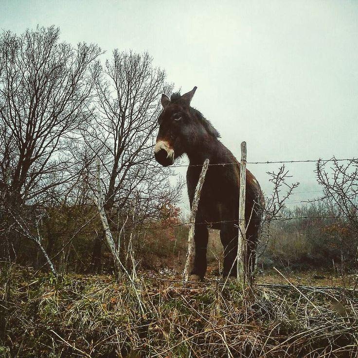 Travelling over #Abruzzo ... #instaabruzzo #donkey